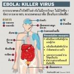 ไวรัสอีโบล่าระบาด อ่านไว้เป็นความรู้เพื่อเฝ้าระวังแต่อย่าตื่นตระหนก