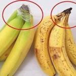 วิธีเก็บกล้วยไว้กินนานๆ