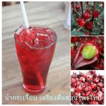 น้ำกระเจี๊ยบ เครื่องดื่มสมุนไพรไทย