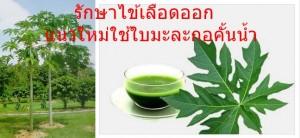 รักษาไข้เลือดออก แนวใหม่ใช้ใบมะละกอคั้นน้ำ