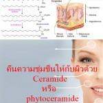 คืนความชุ่มชื่นให้กับผิวด้วย Ceramide หรือ phytoceramide