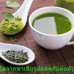 สารสกัดจากชาเขียวปลอดภัยต่อตับไหม?