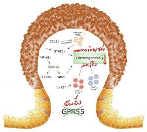 GPR55 ตัวรับของกัญชา ที่อาจฆ่าตัดตอนเซลล์มะเร็งตั้งแต่ก่อกำเนิดได้