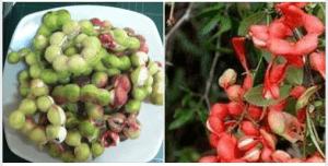 ประโยชน์ของมะขามเทศนั้นมีมากมายเพราะประกอบไปด้วยวิตามินและแร่ธาตุ