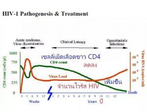 ร่างกายก็มีความจำเป็นต้องได้รับการฟื้นฟู CD4 ที่ถูกทำลาย
