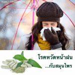 โรคหวัดหน้าฝน…กับสมุนไพร