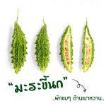 มะระขี้นก (Bitter Cucumber) ผักขมๆ ต้านเบาหวาน