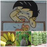 กล้วยน้ำว้า : รักษาโรคกระเพาะ