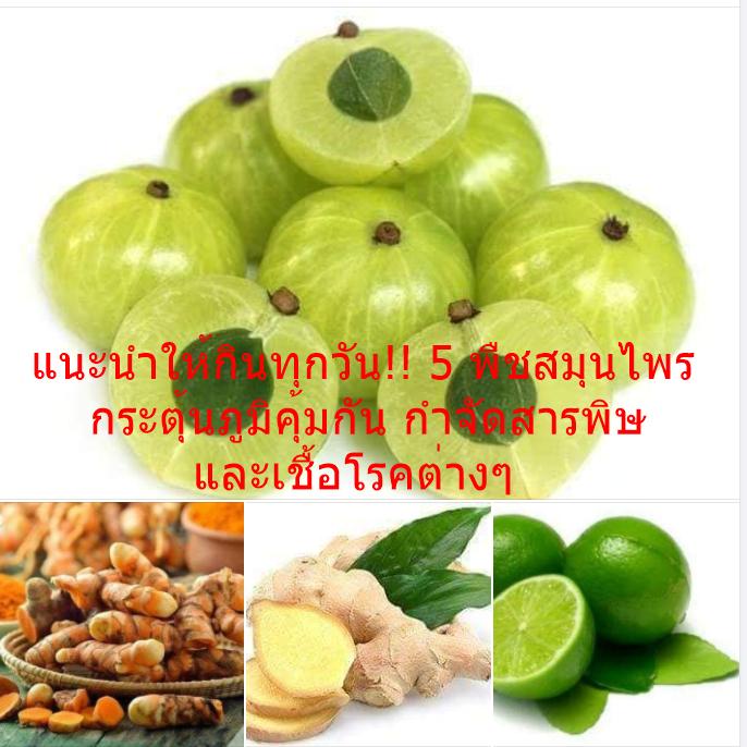 แนะนำให้กินทุกวัน!! 5 พืชสมุนไพร กระตุ้นภูมิคุ้มกัน กำจัดสารพิษและเชื้อโรคต่างๆ