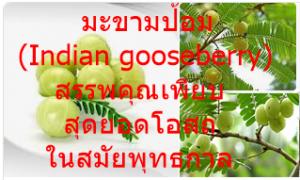 มะขามป้อม (Indian gooseberry) สรรพคุณเพียบ สุดยอดโอสถในสมัยพุทธกาล