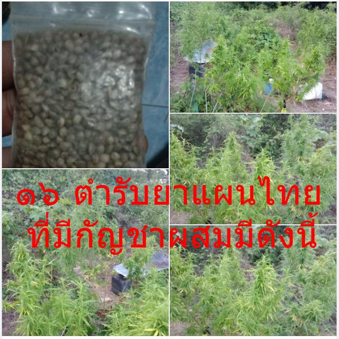 ๑๖ ตำรับยาแผนไทย ที่มีกัญชาผสมมีดังนี้