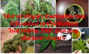 วิธีทำชากัญชา Cannabis tea มีขั้นตอนง่ายๆไม่ซับซ้อน ให้สารสกัด THC ยังคงอยู่เมื่อชงชากัญชา