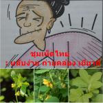 ชุมเห็ดไทย : หลับง่าย ถ่ายคล่อง เยี่ยวดี