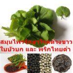 สมุนไพรรักษาโรคด่างขาว ใบบัวบก และ พริกไทยดำ