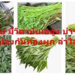 ผักบุ้งไทย มีวิตามินเอสูง บำรุงสายตา มีกากใย ป้องกันท้องผูก ลำไส้ ริดสีดวง