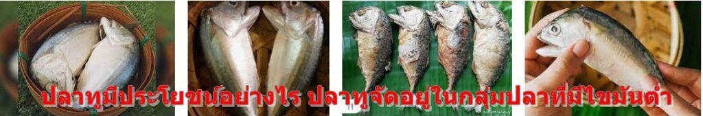 ปลาทูมีประโยชน์อย่างไร ปลาทูจัดอยู่ในกลุ่มปลาที่มีไขมันต่ำ