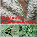 สูตรสมุนไพรกำจัดแมลงศัตรูพืช