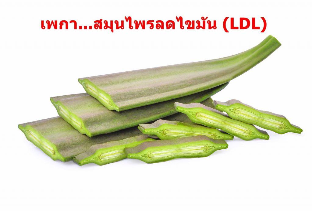 เพกา...สมุนไพรลดไขมัน (LDL)