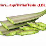 เพกา…สมุนไพรลดไขมัน (LDL)