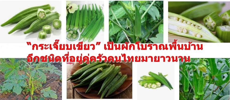 """""""กระเจี๊ยบเขียว"""" เป็นผักโบราณพื้นบ้านอีกชนิดที่อยู่คู่ครัวคนไทยมายาวนาน"""